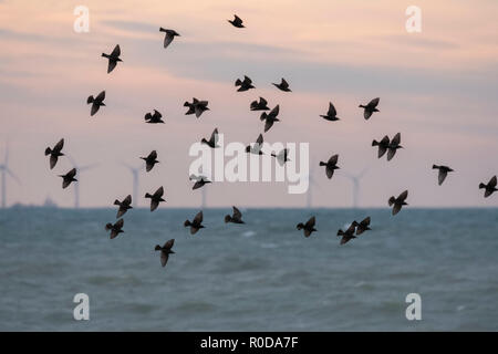 Ferring West Sussex, Sunday 4th November 18. UK Weather, Starlings are enjoying the bright and breezy start to the day whilst showing their fantastic displays in front of the Rampion Wind Farm in the early morning light. © Photovision Images News / Alamy Live News. - Stock Image