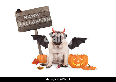 pug dog dressed up as devil for halloween, with  funny pumpkin lantern and wooden board, isolated on white background - Stock Image