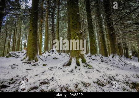 Woodland, Mount Floyen, Bergen, Norway. - Stock Image