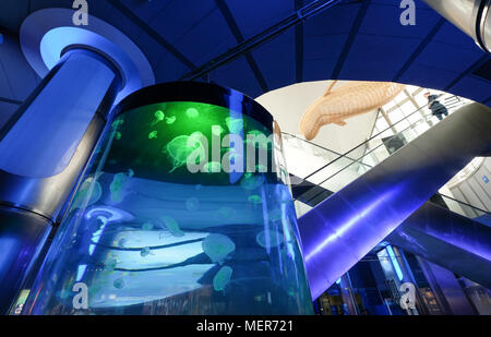 Interior views of Oceanografic, a large modern aquarium in the City of Arts and Sciences, Valencia, Spain - Stock Image