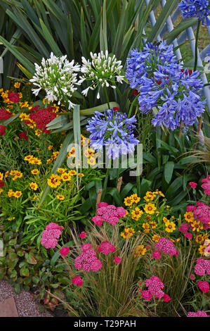 A colourful flower border with flowering Achillea milefoiu apfelbute, amaryllis and stipa grass - Stock Image
