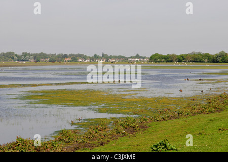Port Meadow, Oxford, Oxfordshire - Stock Image