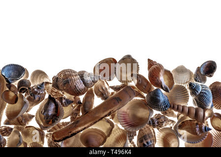 A mixed variety of sea shells. Background featuring a mixture of various seashells, with copy space. - Stock Image
