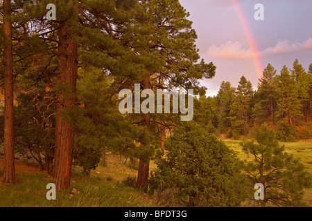 Rainbow after summer rainstorm over ponderosa pine forest in Fay Canyon area, Coconino National Forest, Flagstaff, - Stock Image