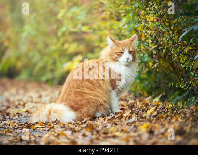 Mister autumn cat - Stock Image