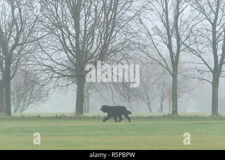 Stirlingshire, Scotland, UK - 2 December 2018: uk weather - a foggy morning in King's Park, Stirling Credit: Kay Roxby/Alamy Live News - Stock Image