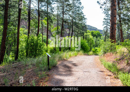 Trees in forest and path at Main Loop trail in Bandelier National Monument in New Mexico during summer in Los Alamos - Stock Image