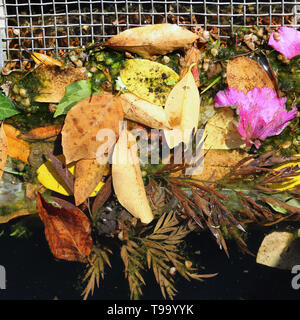 Colorful leaves and flower petals in water from above. This photo includes dark water, metal web and plenty of beautiful leaves. - Stock Image