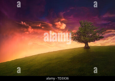 landscape background of lonely tree on hill with beautiful sunset sky - Stock Image
