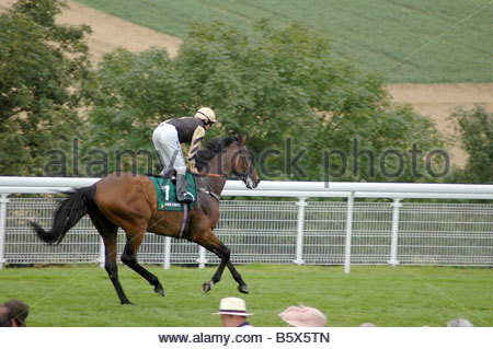 Cantering down to the start at Goodwood Racecourse - Stock Image