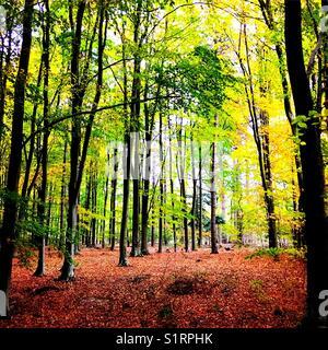 Woodland autumn - Stock Image