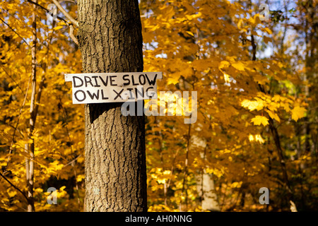 Drive Slow Owl Crossing Sign posted on a tree - Stock Image