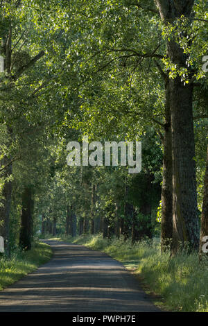 France, department 44, road following the Canal de La Martiniere, spring. - Stock Image