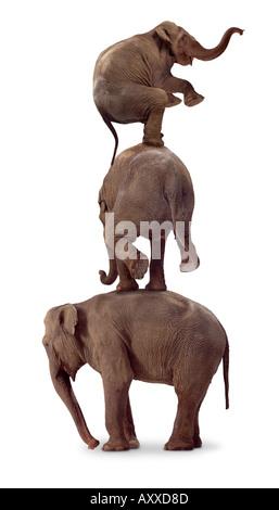 Three elephants - Stock Image