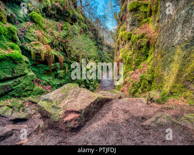 Lud's Church the deep Millstone Grit moss-covered chasm full of history, myths & legends near Gradbach in the Peak District National Park, Staffordshire - Stock Image