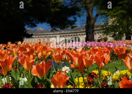 Brighlty coloured flower beds in front of Royal Crescent, Bath, UK, - Stock Image