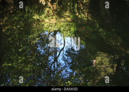 Sintra Gardens, Quinta da Regaleira reflections of trees and sky in a magical woodland pond - Stock Image