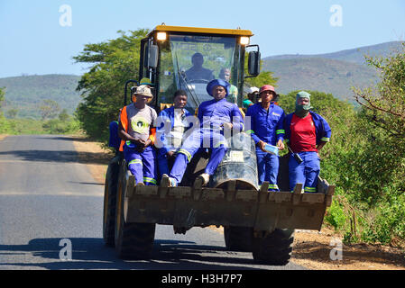 Workmen  in Hluhluwe–iMfolozi Park South Africa in the bucket of a tractor being transported on the road to another - Stock Image