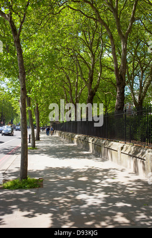 Pavement beside the Victoria Embankment road lined by trees.  London England UK. - Stock Image