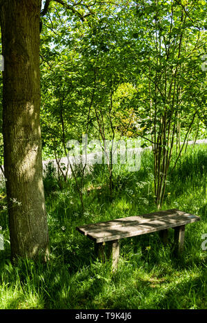 Simple wooden bench, on a sunny day in a woodland glade, with dappled shade. - Stock Image
