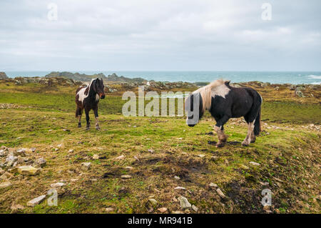 Horses on the landscape in Donegal, Ireland - Stock Image
