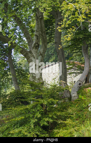 A rural house cabin in the Woods of beech trees in the countryside alps of Northern Italy - Stock Image