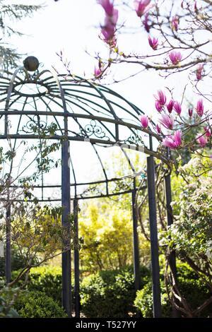 Pink magnolia blossoms in springtime at the Hines Garden, at the Oregon Garden in Silverton, Oregon, USA. - Stock Image