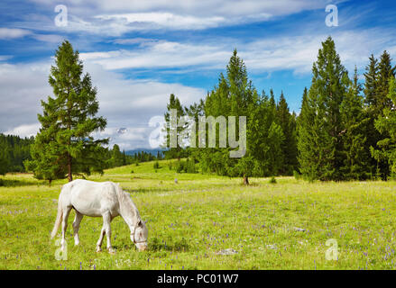 Landscape with forest and grazing horse - Stock Image