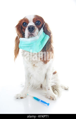 Sick dog puppy photo illustration. Animal pet doctor vet mask on puppy. Dog with injection vaccination. Animal pet - Stock Image