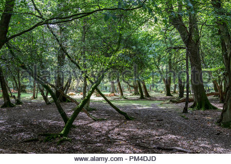 Deciduous mixed woodland scene in the New Forest, Hampshire, UK - Stock Image