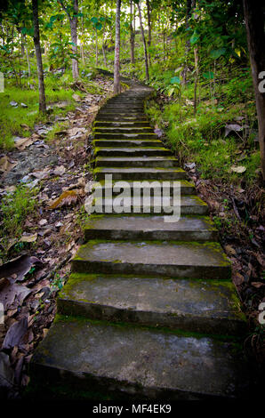 Old and mossy stairs in the middle of forest - Stock Image