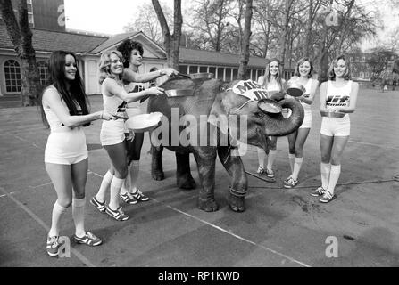 Strange tales of London. Beauty Queens (who will be in the pancake race on Tuesday) and baby elephant Minoti - she is five, but for an elephant that is a baby. February 1975 75-00776-001 - Stock Image
