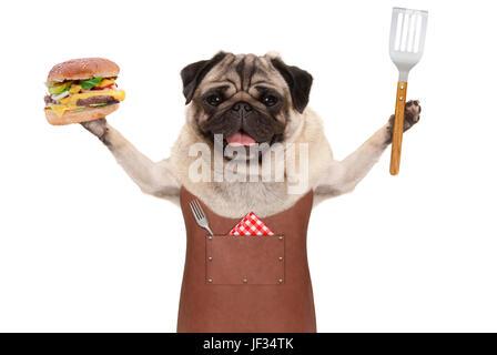 smiling pug dog wearing leather barbecue apron, holding up hamburger and spatula, isolated on white background - Stock Image