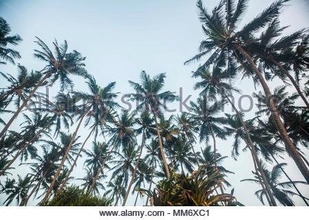 Palm trees and sky, Indian ocean, Sri Lanka - Stock Image