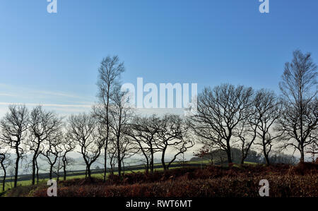 Row of bare winter trees against blue sky and distant Devon countryside hills in mist, near Crediton, UK - Stock Image
