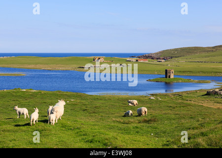 Sheep grazing by Loch Scolpaig with Tower folly on small islet in summer. North Uist Outer Hebrides Western Isles - Stock Image