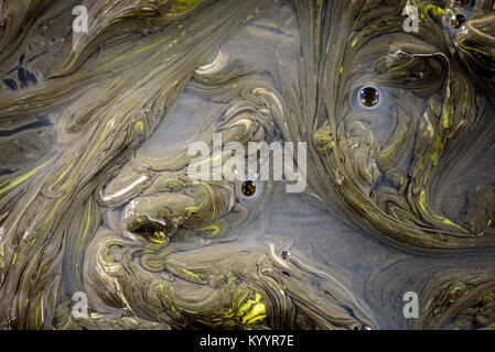 Congealed oil on water in yellow and black creating an abstract organic pollution based design. Copy space area - Stock Image