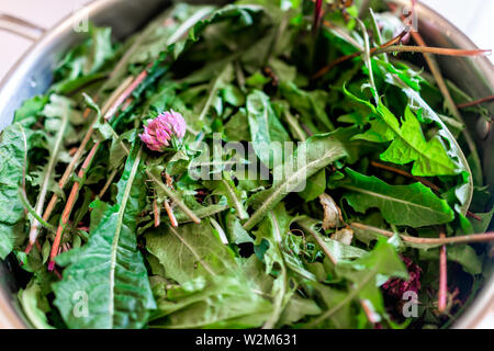 Pot filled with wild green dandelion leaves and pink clover flowers for health closeup showing detail and texture - Stock Image
