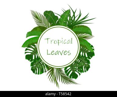 Set. Green tropical leaves of banana, coconut, monstera and ogawa. In a circle place for ads, advertising. illustration - Stock Image