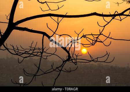 Beautiful view of sunrise behind abstract tree branch - Stock Image