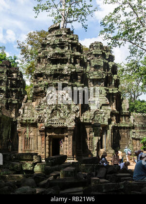Ruins of Ta Prohm modern name of Angkor temple Siem Reap Province Cambodia built in the Bayon style in  1186 A.D Buddhist temple - Stock Image