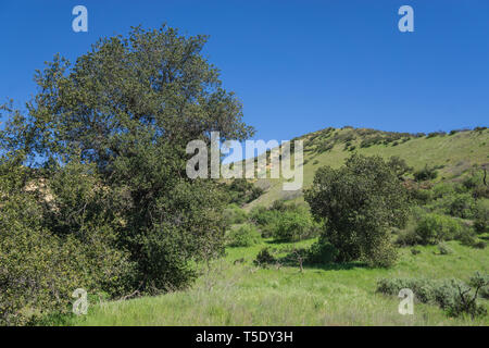 Greenery in the canyons of southern California's Los Angeles County near Santa Clarita. - Stock Image