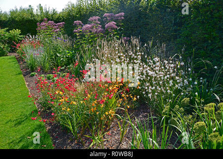 Colourful flower border with attractive mixed planting with Eupatorium maculatum in a country garden - Stock Image