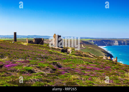 The abandoned Wheal Coates tin mine, set on the Cornish cliffs amongst heather, near St Agnes Head, North Cornwall, UK on a beautiful summer day, one  - Stock Image