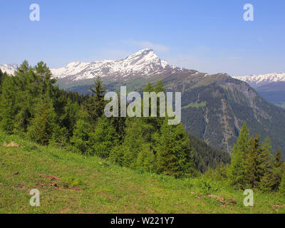 Piz Beverin and forest. - Stock Image