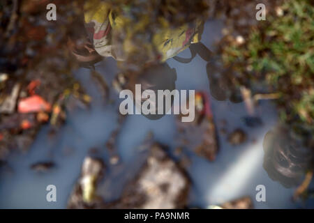 Puddle of polluted water on the floor with reflection of a child at in Arif Nagar, Bhopal, India - Stock Image
