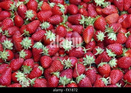 ripe strawberries - Stock Image