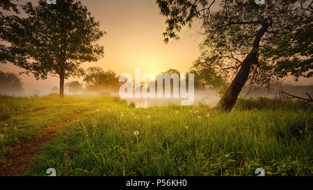 Foggy sunrise. Morning fog with sun behind the trees. - Stock Image