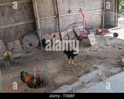 Caged chickens in small wire cages on bare ground. Cai Be, Tiền Giang Province, Mekong Delta, Vietnam, Asia - Stock Image