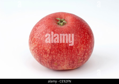 Domestic Apple (Malus domestica), variety: Beauty of Bath. Apple, studio picture against a white background. - Stock Image